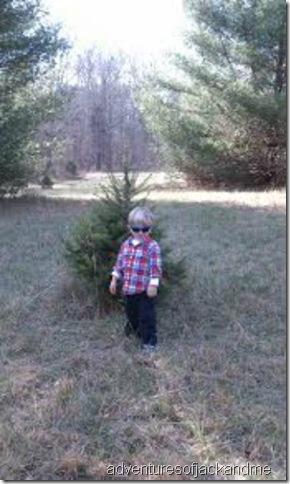 Jack picks his tree