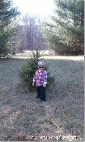 Jack picks his tree